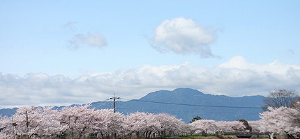 2008_0408sakuraB.jpg