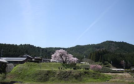 2008_0420sakura.jpg