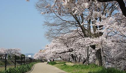 20120413sakura.jpg