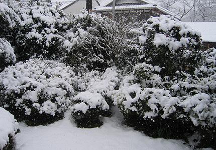 2008.02.13.yuki.jpg