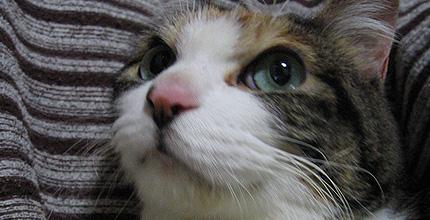 20090127miiko.jpg