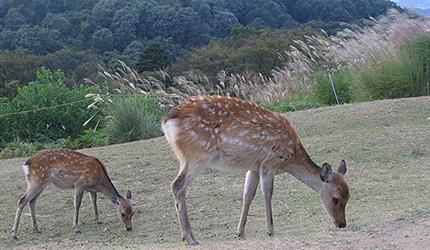 20090928sikasusuki.jpg
