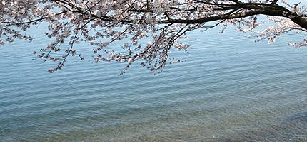 2009_0418kaizu.jpg
