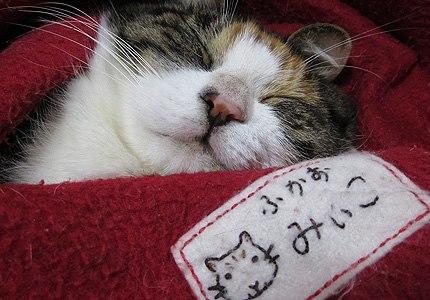 20121111miiko.jpg