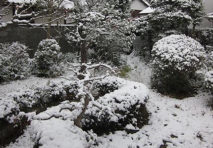 20130118yuki.jpg