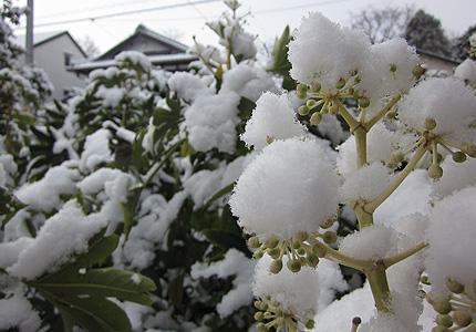 20130118yuki2.jpg