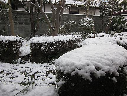 20160301yuki.jpg